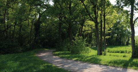 Le bois de Saint-Eutrope